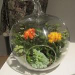 """""""Buenos Aires"""" terrarium by Vernon Caldera of Left Brain Right Brain Design"""