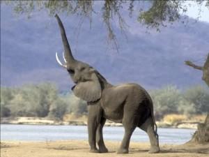 Man, I love elephants.