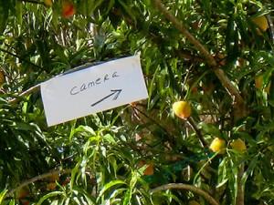 fruit-tree-camera-sign