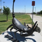 Big Steel Scorpions Stake out Turf in El Paso's Northeast Regional Park