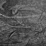 Void (Log), Graphite on Paper, 11&quot; x 14&quot;, 2011