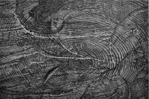 """Void (Log), Graphite on Paper, 11"""" x 14"""", 2011"""