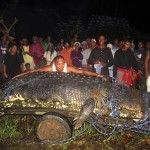 Giant Croc Caught in Philippines: 2370lb Monster Named After Naturalist Who Died Hunting Him