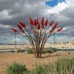 Large Steel Shrubbery  at El Paso's Battle Blvd. Roundabout: Ocotillo to be Unveiled Thursday