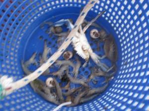 shrimp basket copy