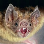 Vampire Bats are Coming to Texas!