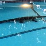 Surprise! Obama's 2013 Budget Doesn't Axe the Arts; Gator Pool Frothing in Anticipation