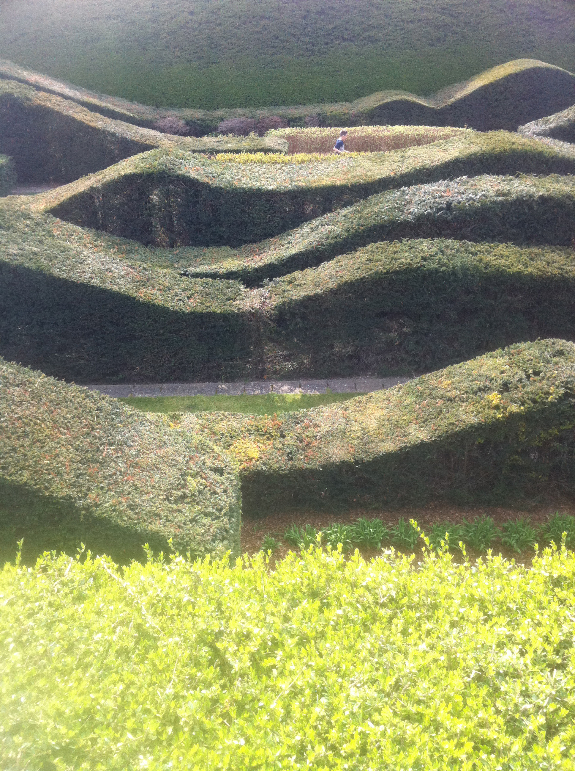 Wavy hedges at Thames Barrier Park.