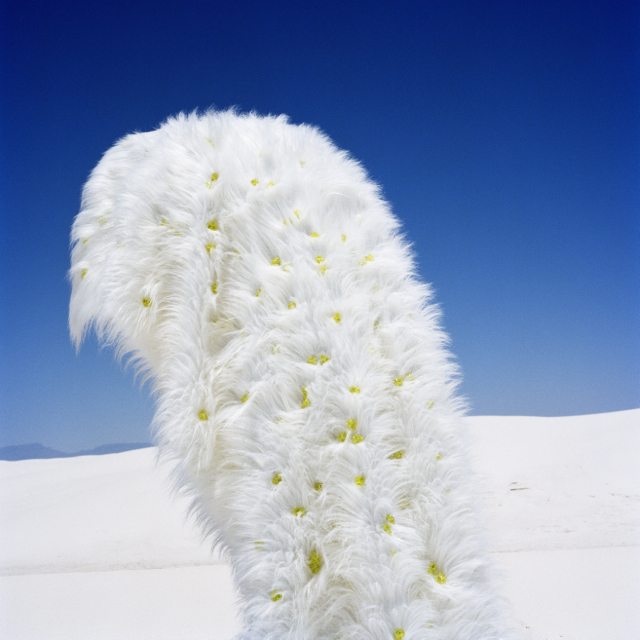 "Susi Brister, ""Crystal-Studded Shag in Dunes,"" 2012, Archival pigment print on Hahnemühle photo rag"