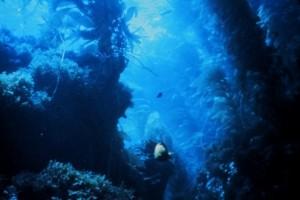 A kelp forest.