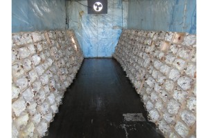 Fungal bricks growing at Far East