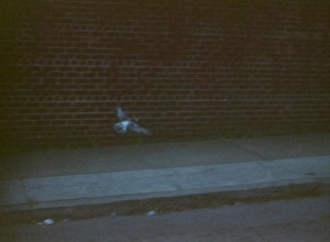 Colby Bird