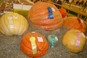 artadia pumpkins