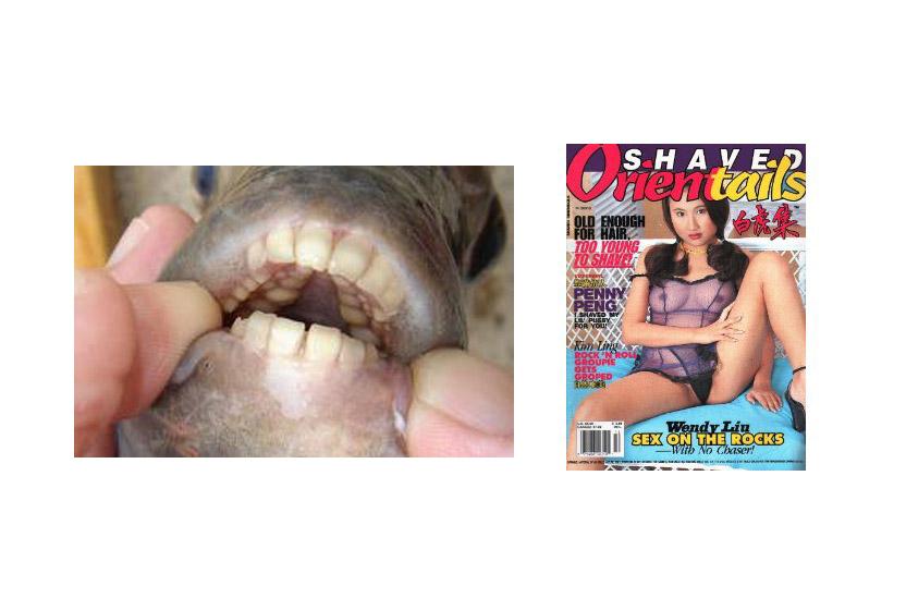 Vagina Dentata: Not Just a Latin Term for a Charming Folk Tale!