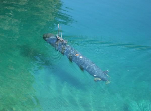 SubRon5 R/C Submarine