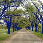 The Blue Trees, 2006, Melbourne Australia, Photo Courtesy of the Artist