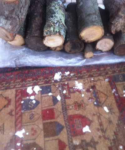 Logs and rugs in the mud room.