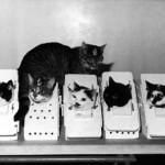 Kitties in Space: Art Pod Spotlights Under-Funded Texas School Art Programs
