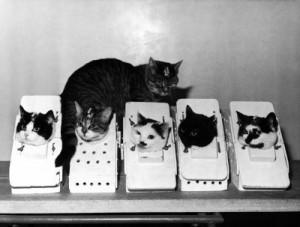 CatsSpacesuitsNASA