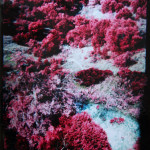Sonya Berg- From Wild Basin 2- Oil on photograph- 24 x 18 in.- 2013