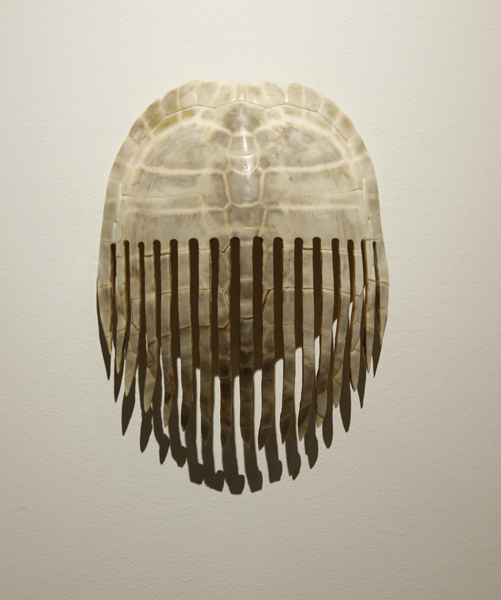 Comb, 2012, turtle shell, 8 1/2 x 6 1/2 x 3 inches