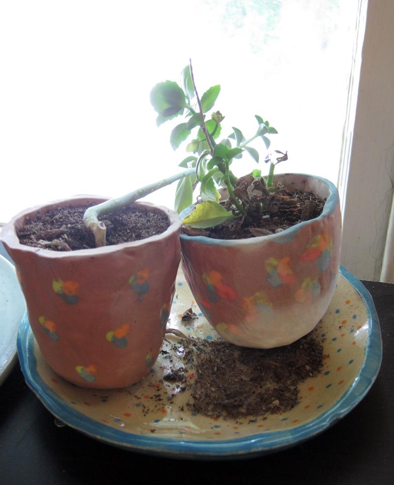 angelplants