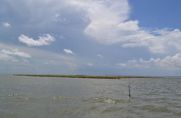 bird island 3