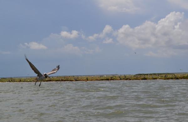 bird island with flyer