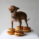 William Hundley, Chihuahua on Cheeseburgers This was just begging for a beer to go with it.