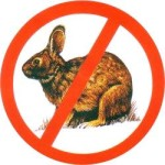 Yet Another Playboy Marfa Update: Post No Bunnies!