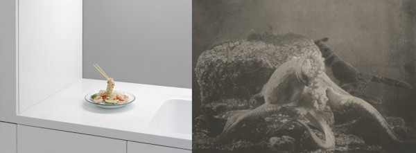Adam Schreiber, Rirkrit Tiravanija, Untitled, 1999, 2012 and Paul Louis Marie Fabre-Domergue, Octopus vulgaris, 1899.