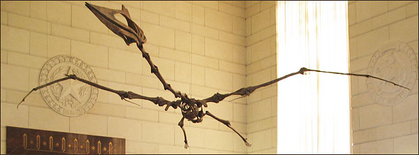 Off topic, but the pterosaur, the largest flying animal ever discovered resides in the Texas Memorial Museum, where Dr. Jones has served as collections manager.