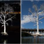 Austin's THIRST Tree Damaged by Recent Floods