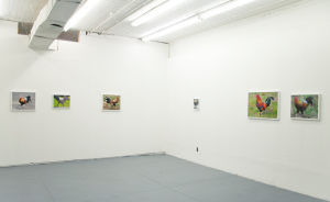 roosters_installation