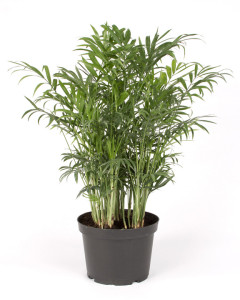 House Plant 1