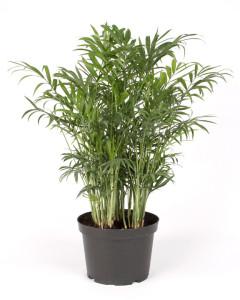ravishing house plants care. House Plant 1 Michael Mazurek  Plants Glasstire