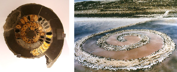 (l) Ammonite, Late Jurassic-Early Cretaceous period, Volga River, Russia (r) Robert Smithson, Spiral Jetty, 1970