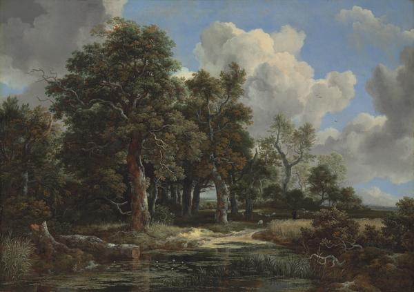 Jacob van Ruisdael Edge of a Forest with a Grainfield, c. 1656 Oil on canvas, 41 x 57 ½ in. (103.8 x 146.2 cm) Kimbell Art Museum, Fort Worth