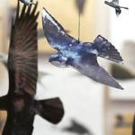 Rosalyn Bodycomb: My Aviary