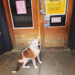 Marfa's Missing Art Dog Could Be in Austin