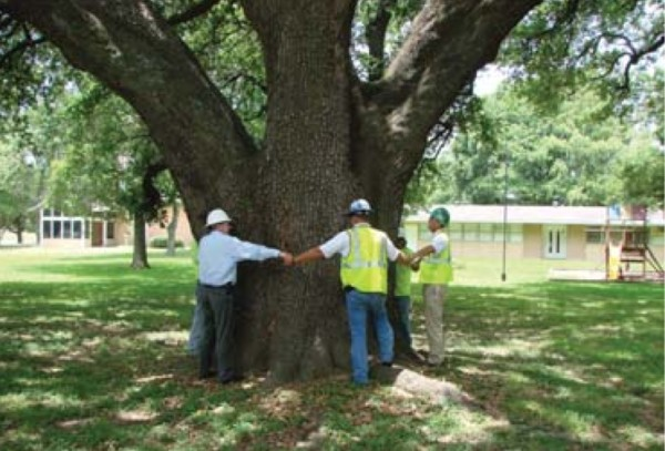 Workers from Embark Services, a MetroNational subsidiary, hugging a giant live oak in Spring Branch.