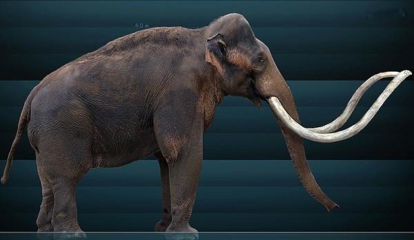 800px-Mammuthus_columbi_Sergiodlarosa