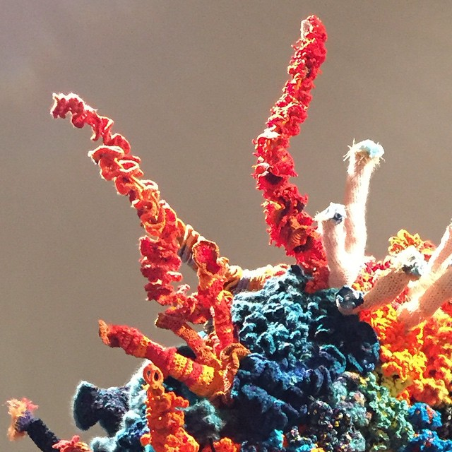 Crochet Coral Reef @ Southwest School of Art, San Antonio