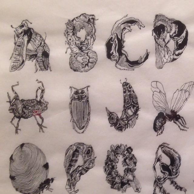 Natasha Bowdoin Insect Alphabet @ Galveston Artist Residency