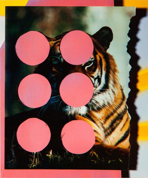 Cut Tiger 2015