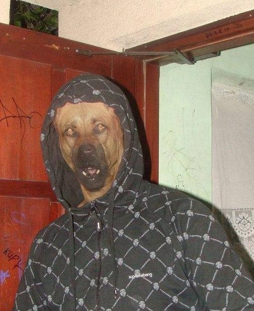 hagood dog