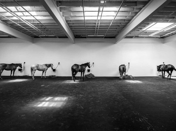 Jannis Kounellis, Untitled (12 Horses), originally from 1969, restaged at Gavin Brown's space in NY earlier this year.