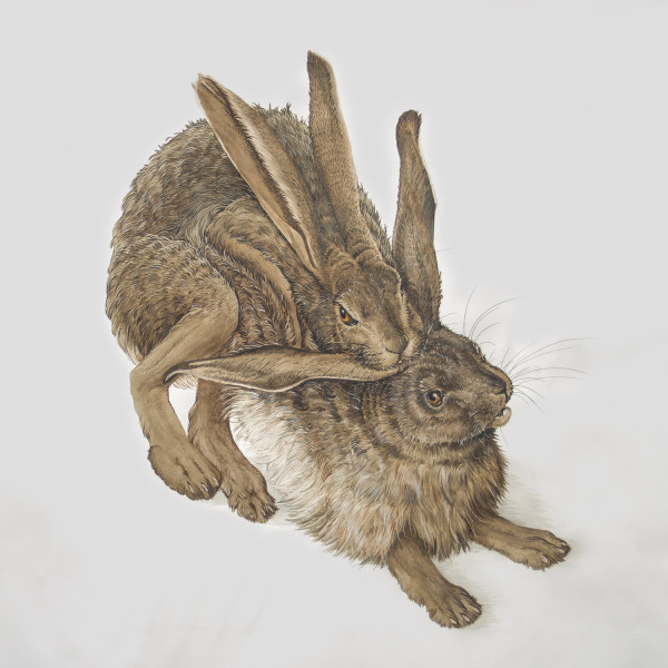 Hares-web