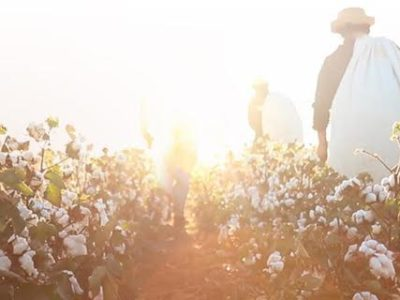 Lubbock: Life of Cotton-La Vida de Algodón