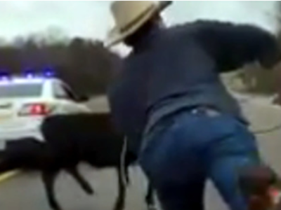 Cowboy ropes Calf